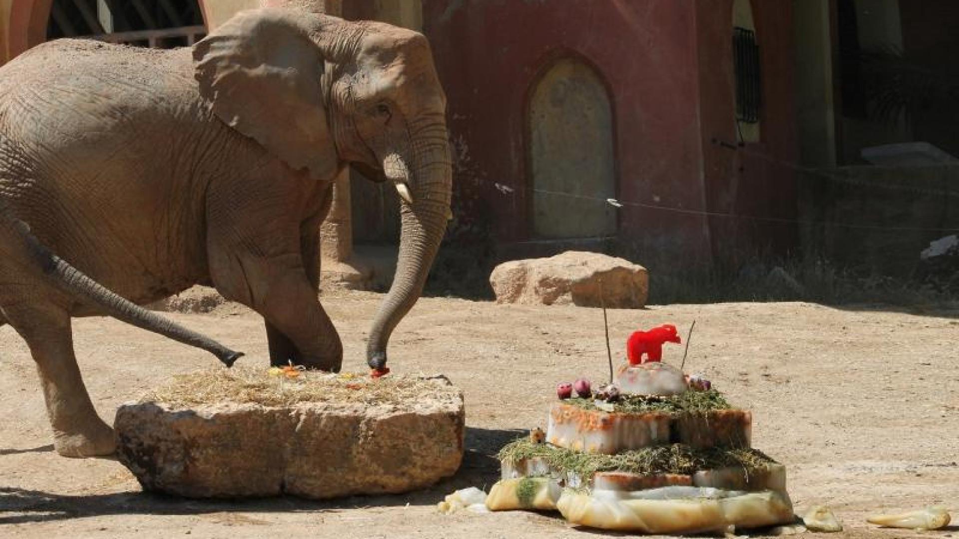 Zoo de Lisboa comemora 134 anos com três dias de festa
