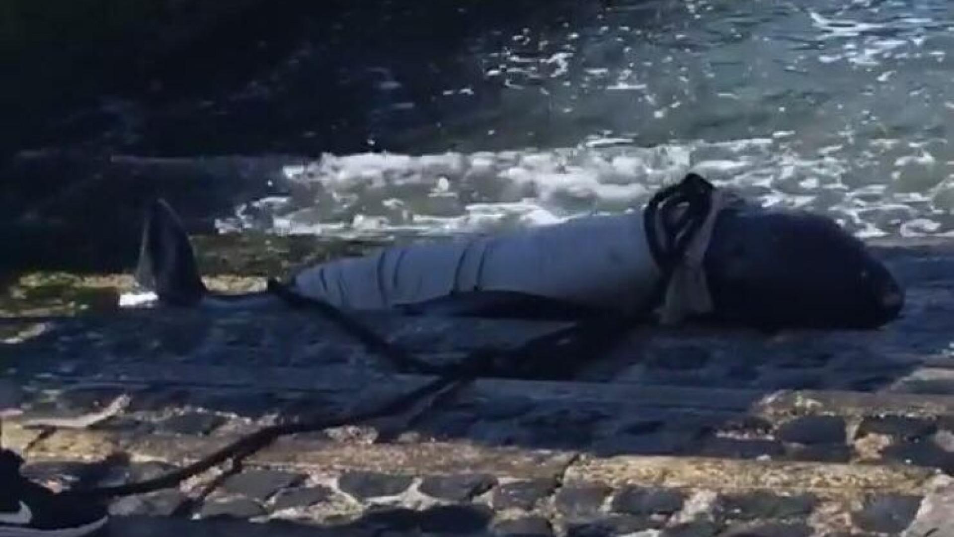 Baleia encalhada junto ao Cais do Sodré, em Lisboa