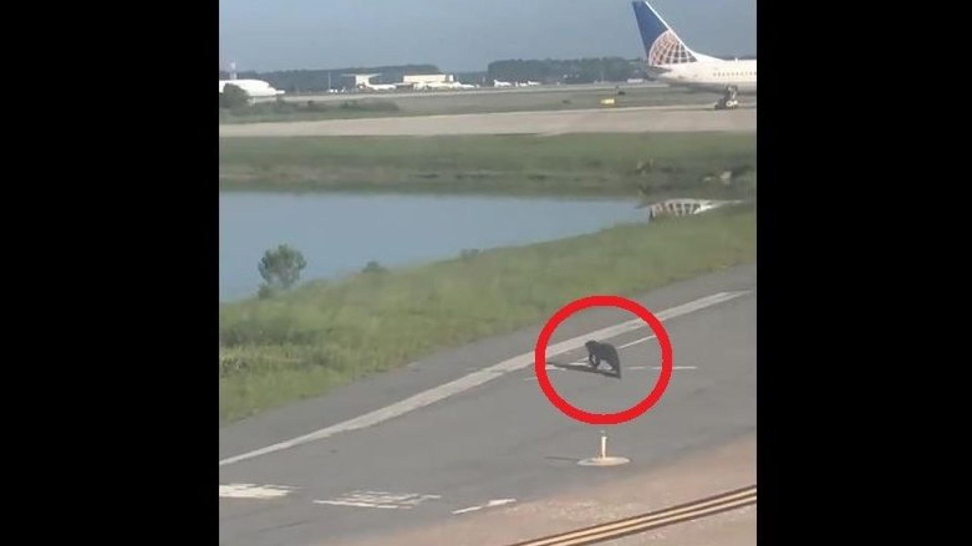 Avião diminui velocidade em aeroporto para… jacaré atravessar a pista