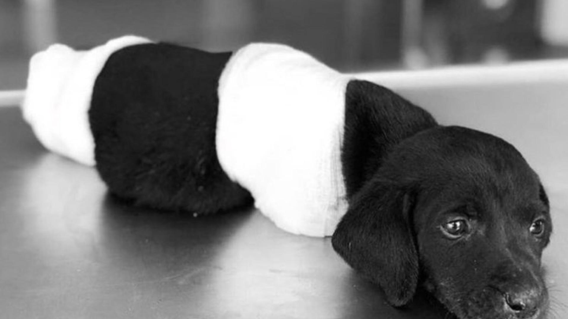 Cão abandonado com pernas e rabo cortados 'aquece' debate político