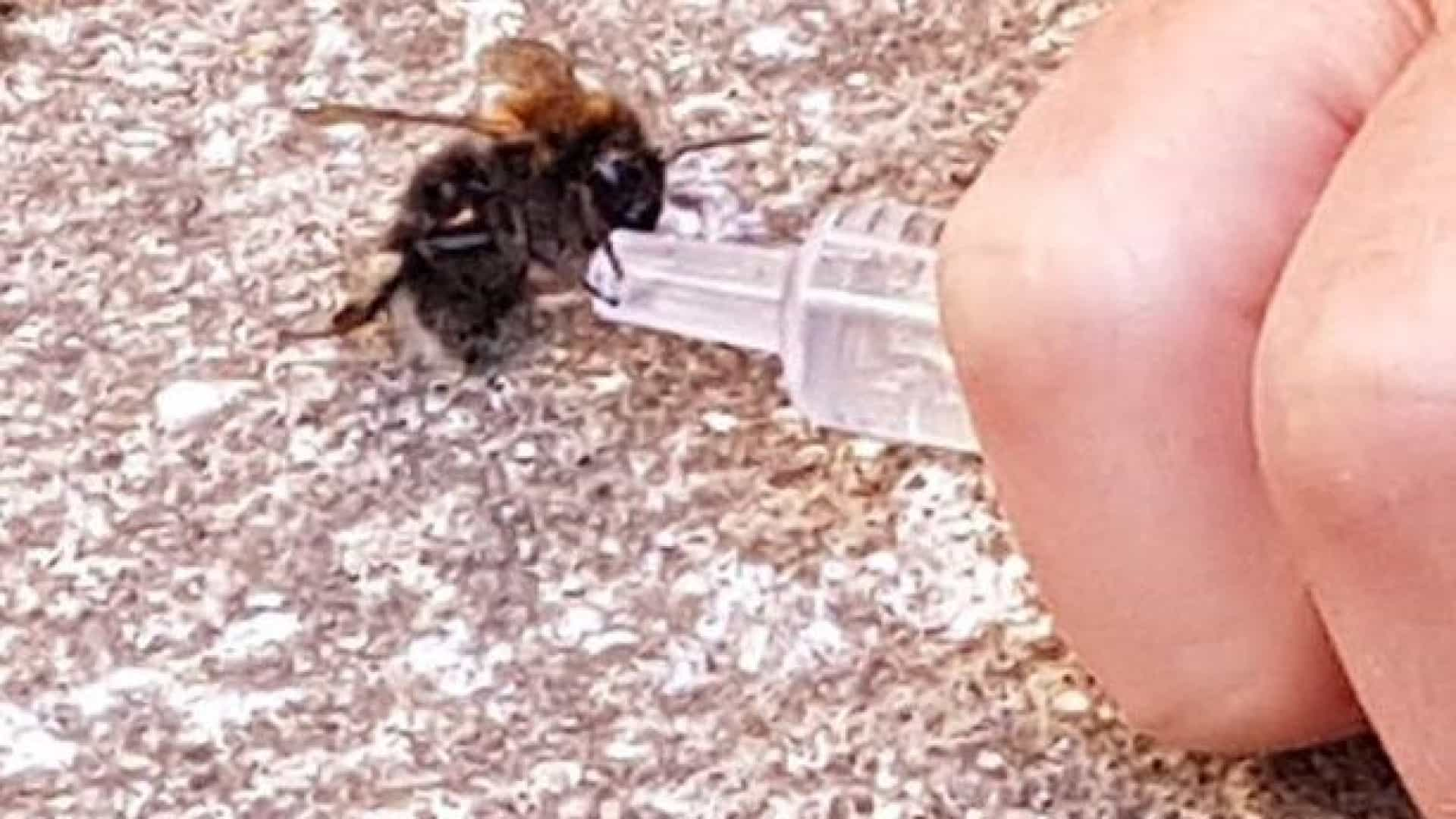 Salva abelha de morrer desidratada durante onda de calor no Reino Unido