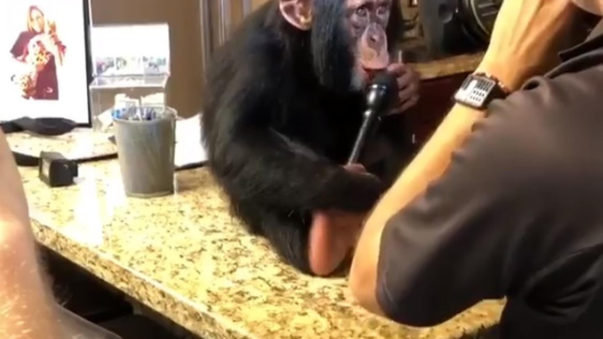Eis o que acontece quando, numa entrevista, se dá o microfone a um macaco