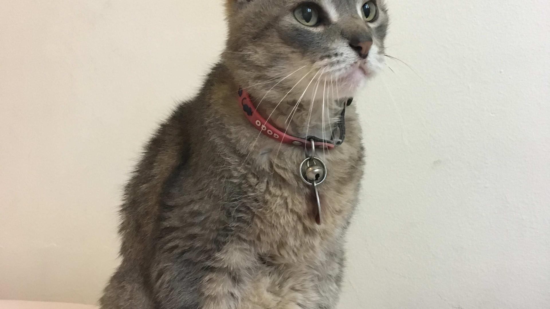 'Calvin Esparguete', a história de um gato citadino chega às livrarias