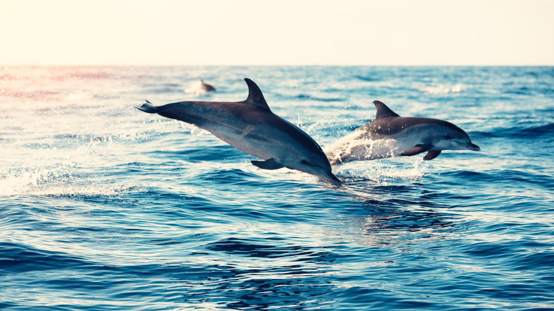É assim que os golfinhos vão sobreviver às alterações climáticas