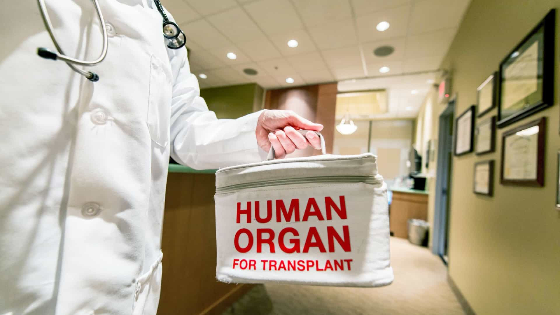 Portugal é o segundo país com maior número de dadores de órgãos