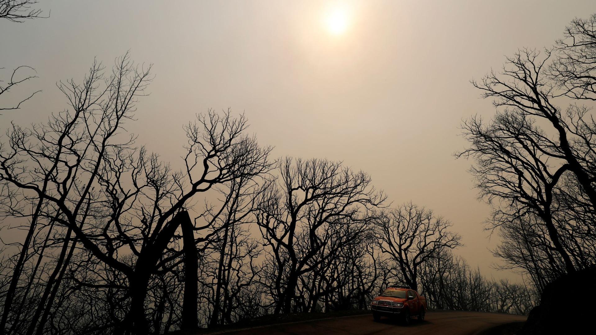 Em 2003, as chamas queimaram mais de 70 mil hectares no Algarve