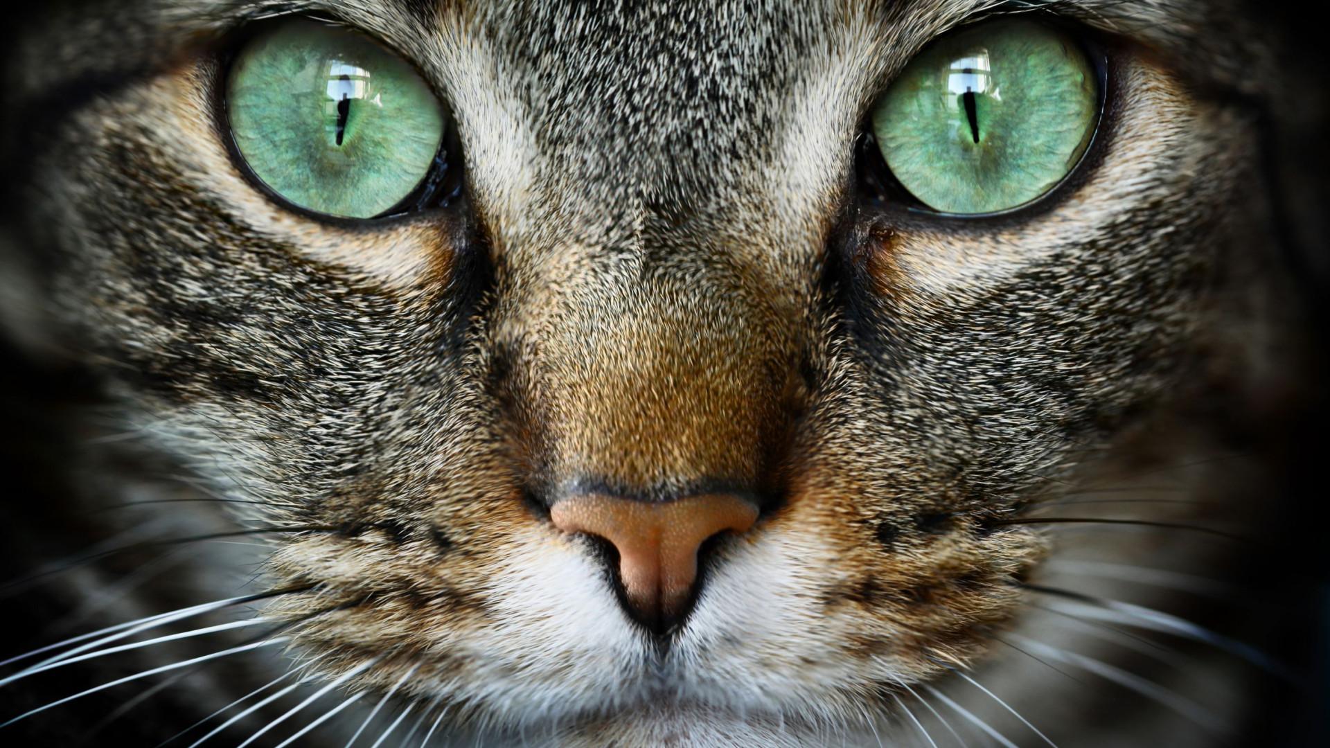 Dia Mundial do Gato: Cinco coisas que ainda não sabe sobre estes felinos