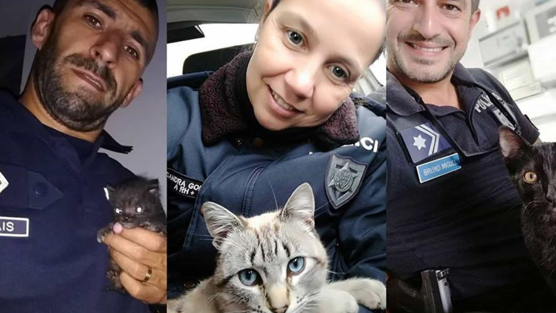 No Dia do Gato, a PSP homenageia felinos resgatados