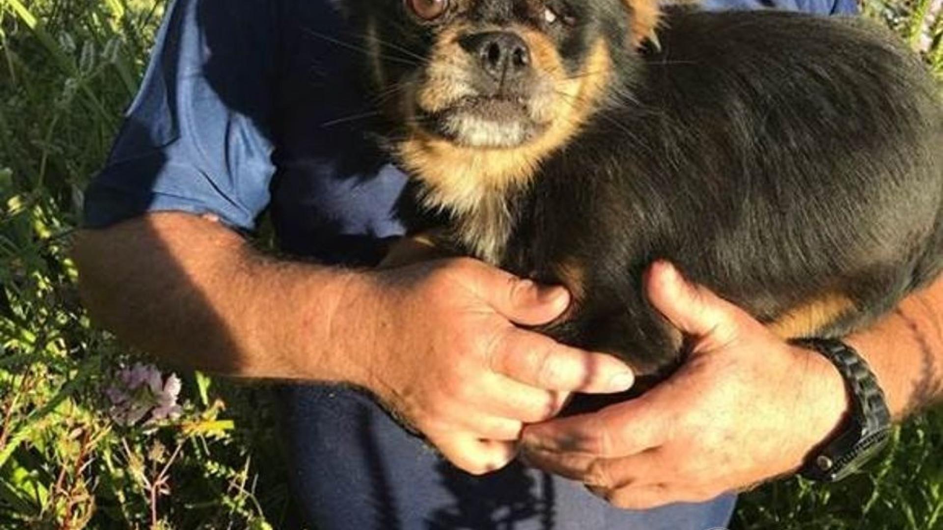 GNR salva cão que caiu num poço e devolve-o ao dono