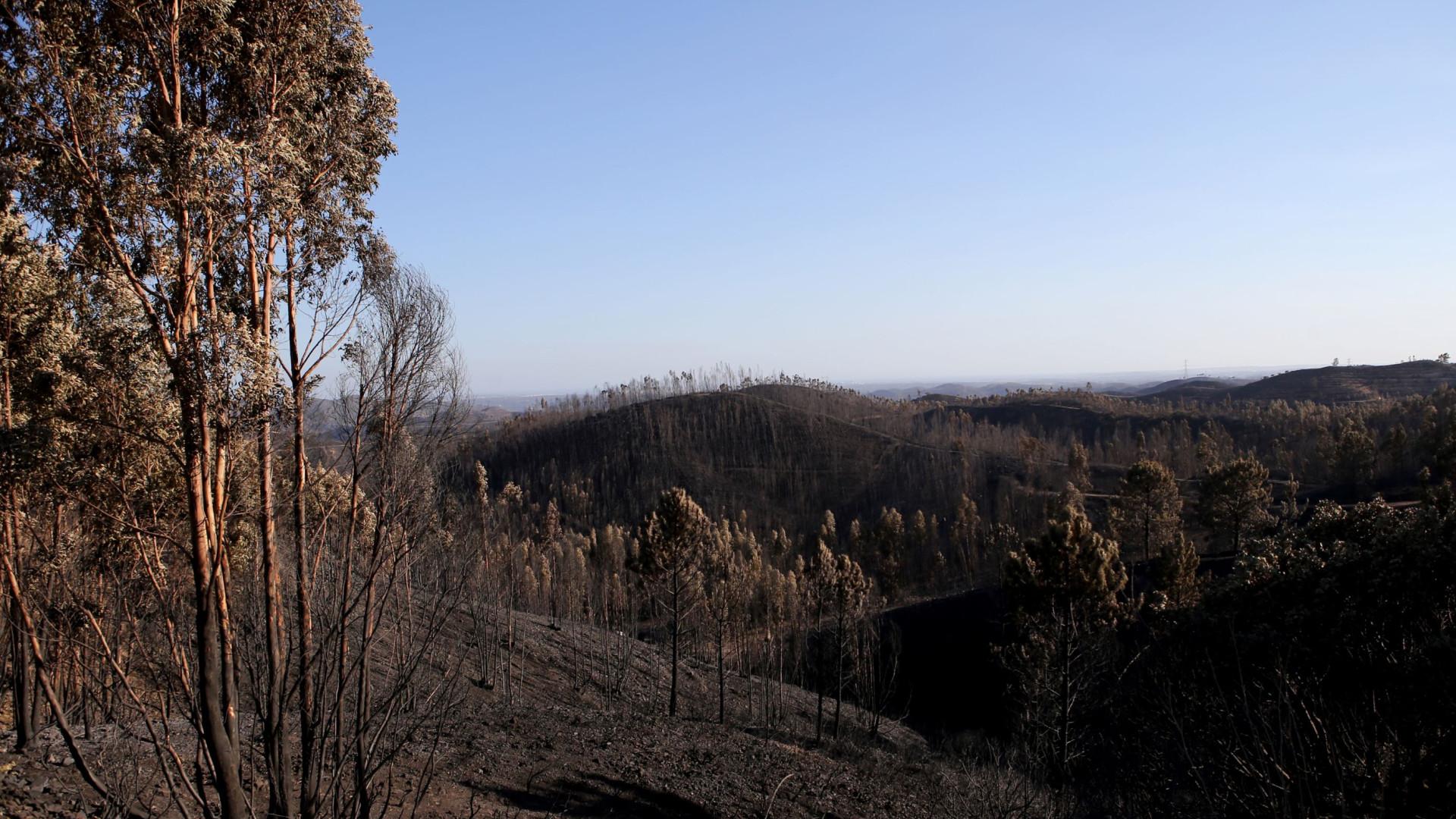 Verdes falam de animais com fome e sede na sequência do fogo em Monchique