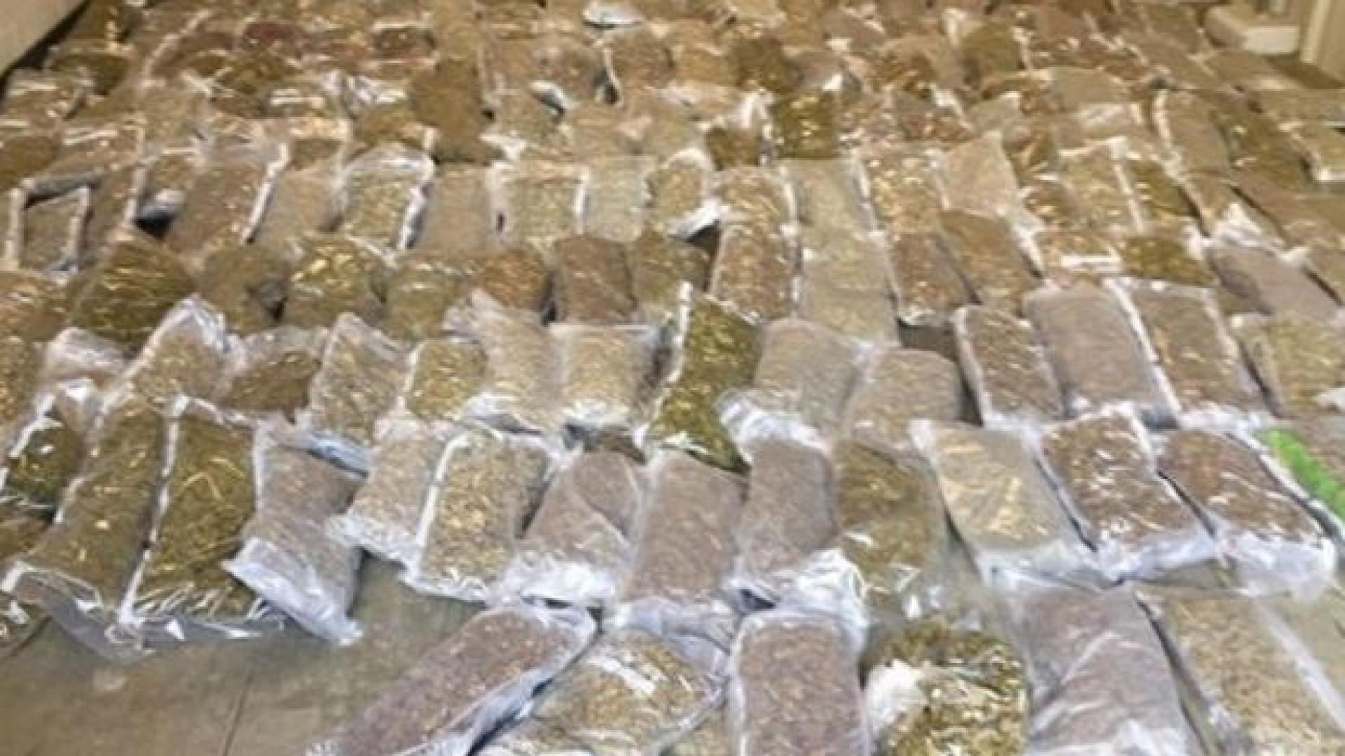 Marijuana no valor de um milhão de dólares descoberta dentro de alfaces
