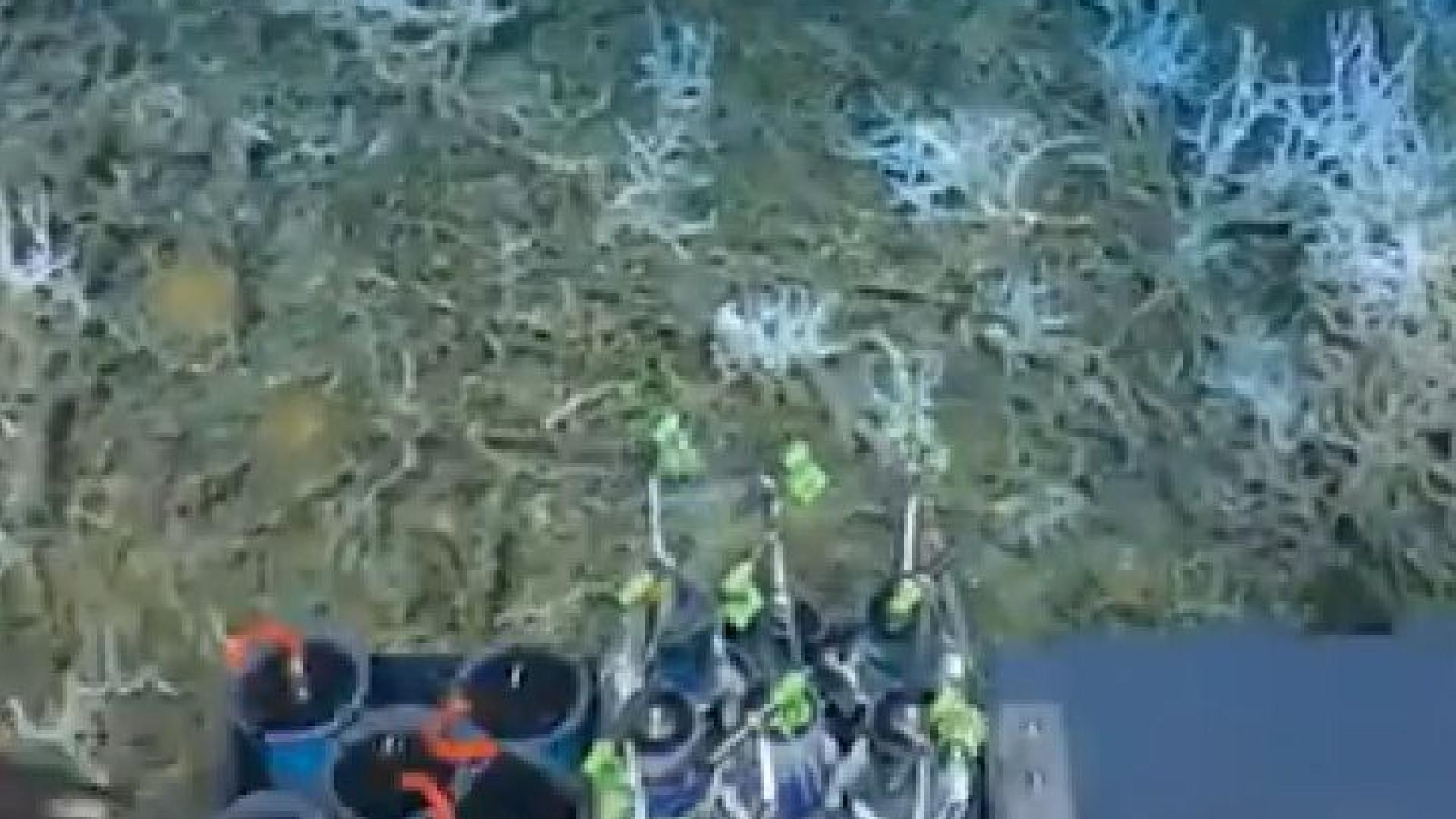 Descoberto recife de coral a grande profundidade na costa dos EUA