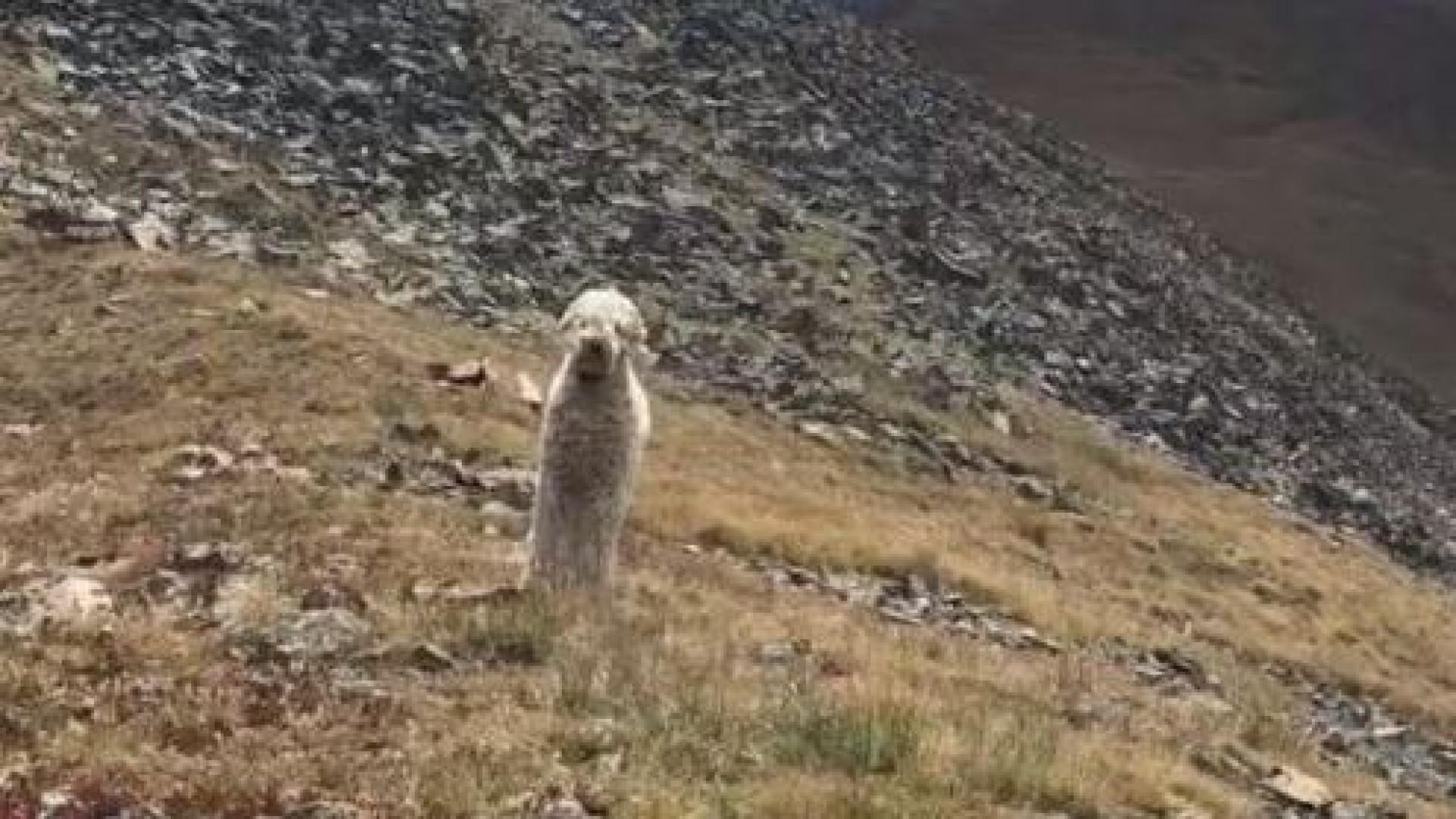 Cão sobrevive 19 dias no local do acidente que matou um dos donos