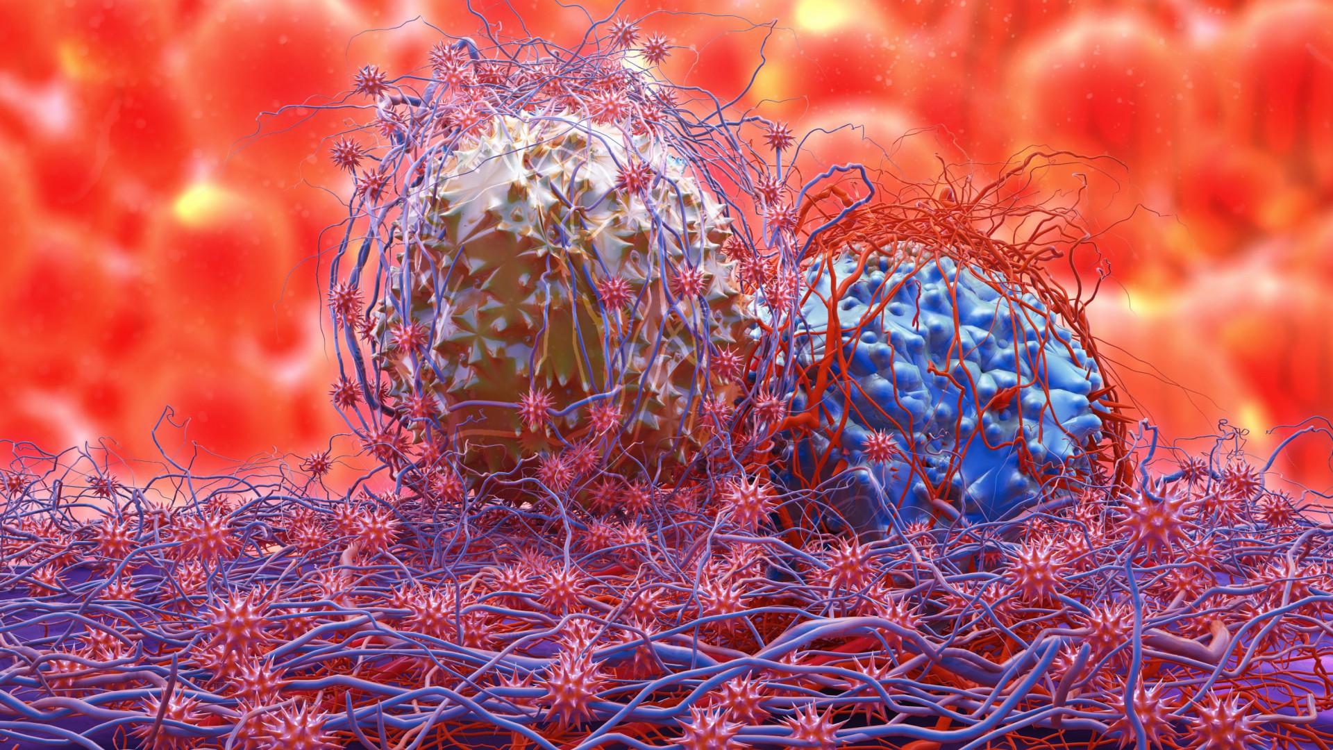 Imunoterapia e imunograma. As armas de peso na luta contra o cancro