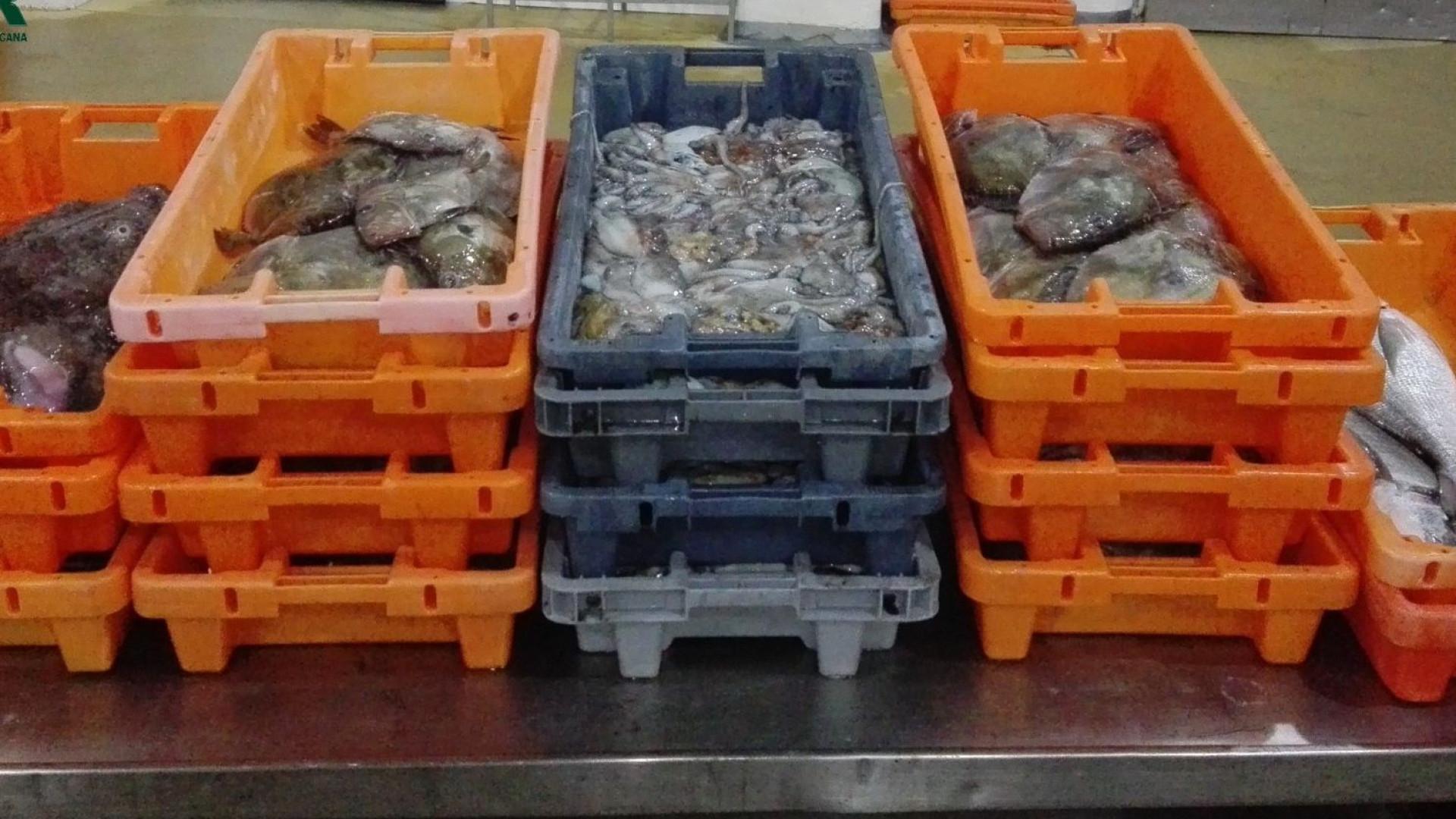 GNR doa pescado apreendido a instituições de solidariedade