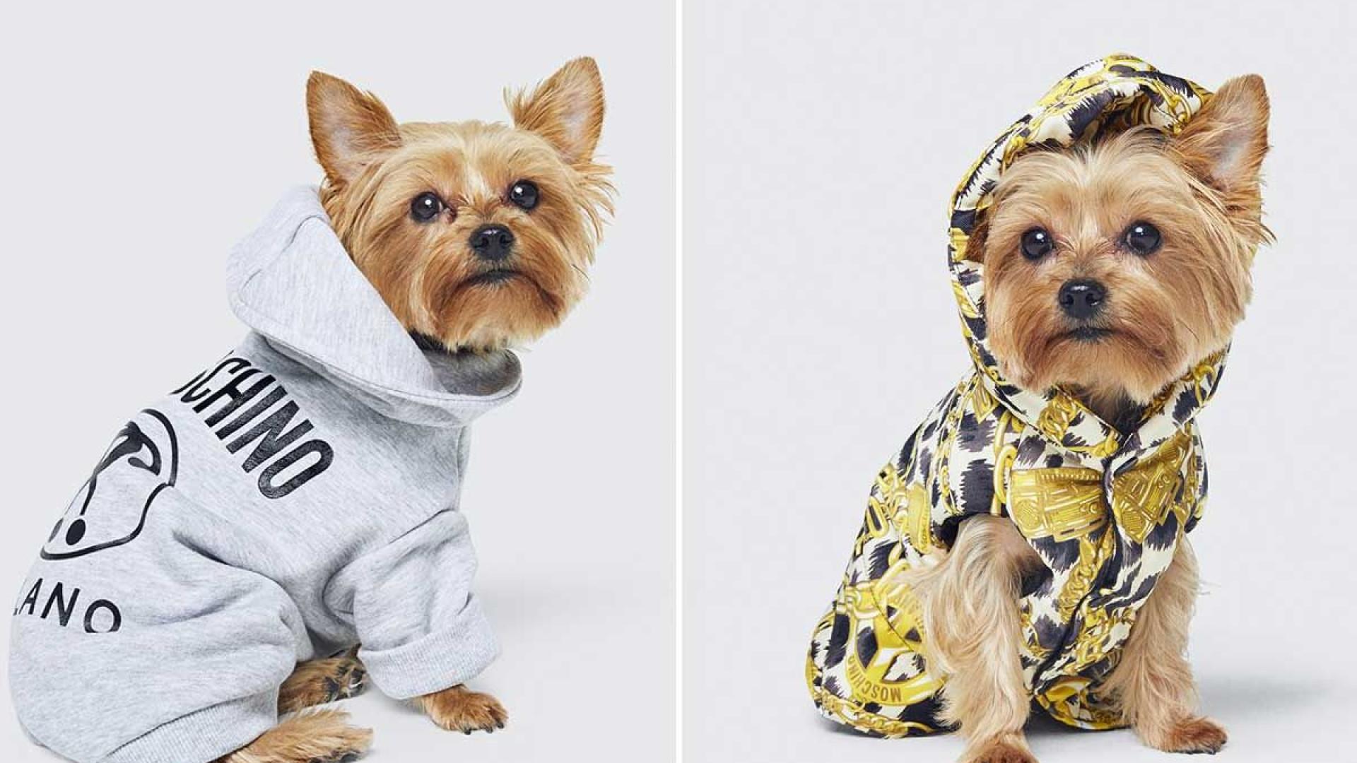 H&M aumenta a aposta em peças para cães em parceria com a Moschino