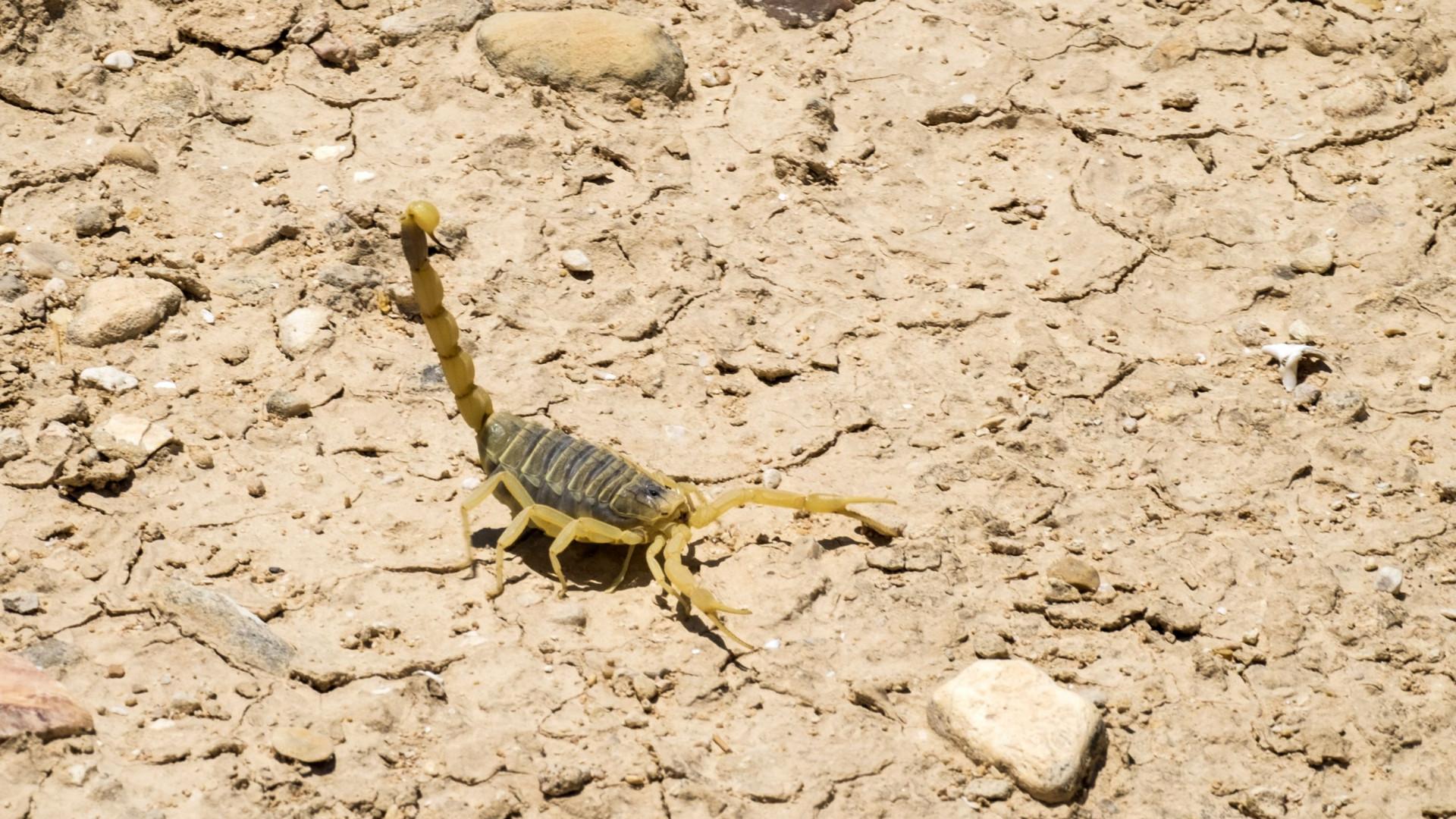 """Bebé recém-nascida sobrevive a sete picadas de escorpião. """"Milagre"""""""