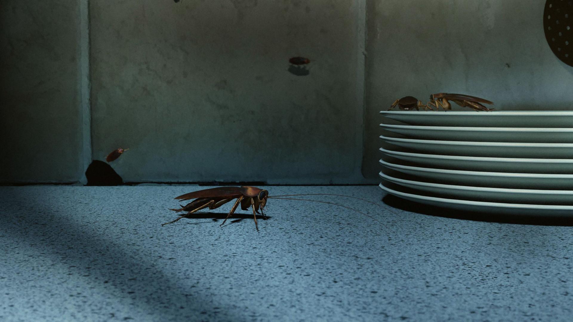 Sintomas de tosse e gripe podem dever-se a infestação de baratas. Leu bem
