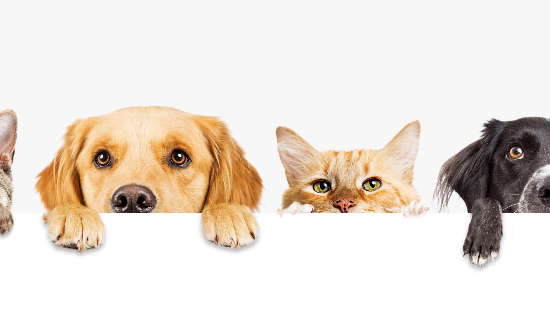Dia Mundial do Animal: Mime o seu amigo de quatro patas