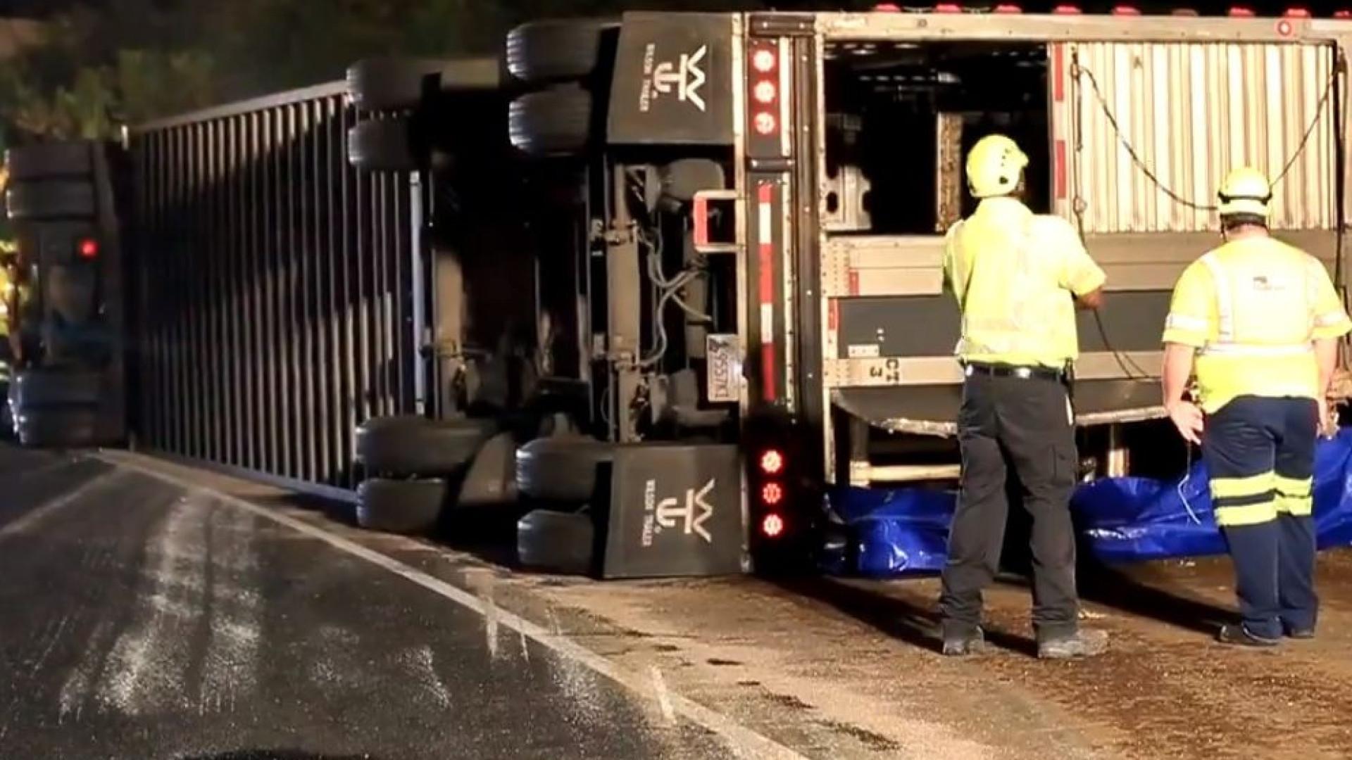 Dezenas de vacas à solta em autoestrada nos EUA após acidente