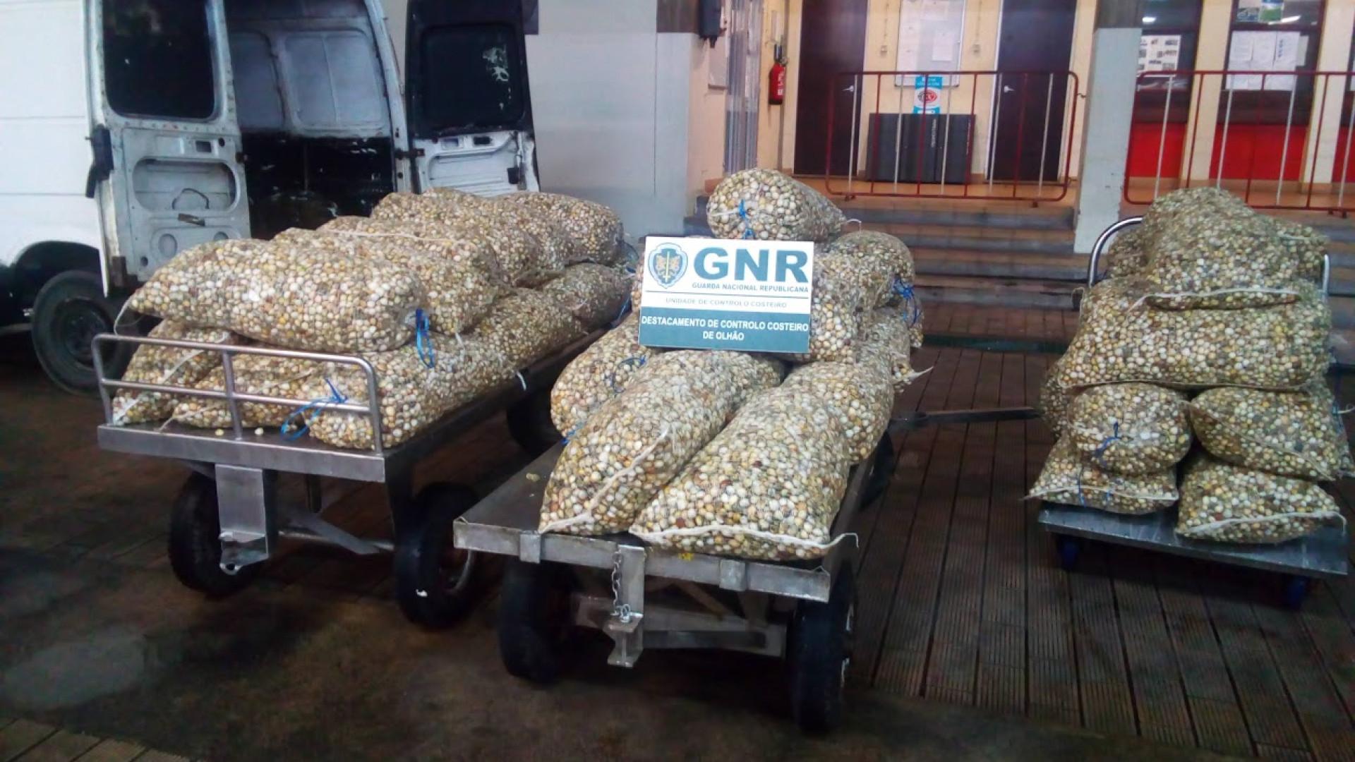Mais de 1,5 toneladas de berbigão apreendidas. Valiam 4.500 euros