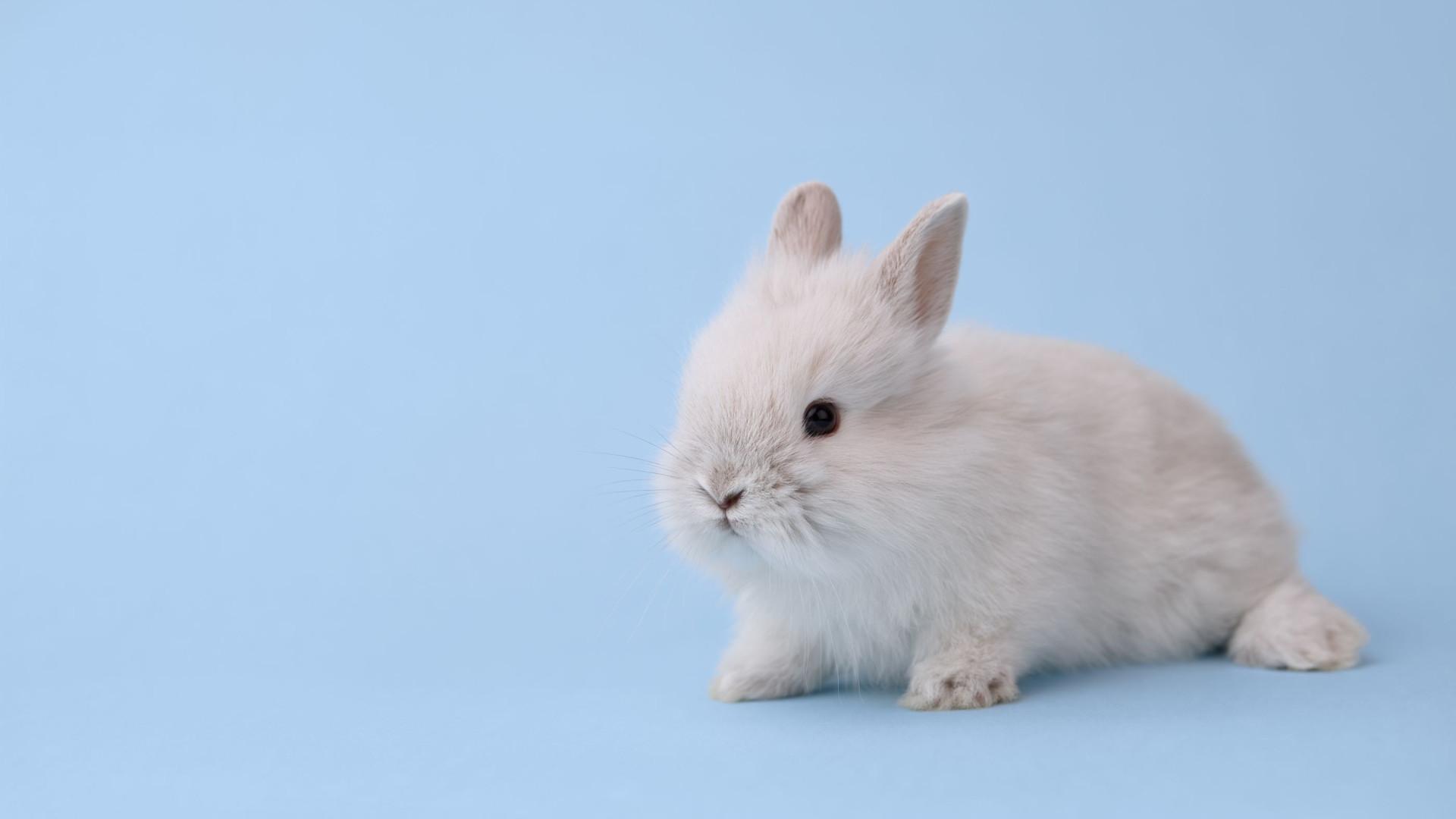 Dove já não testa em animais, e tem selo de 'cruelty free' que o comprova