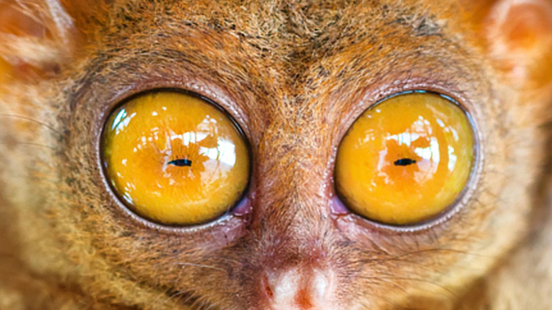 Os olhares mais belos e indiscretos do reino animal