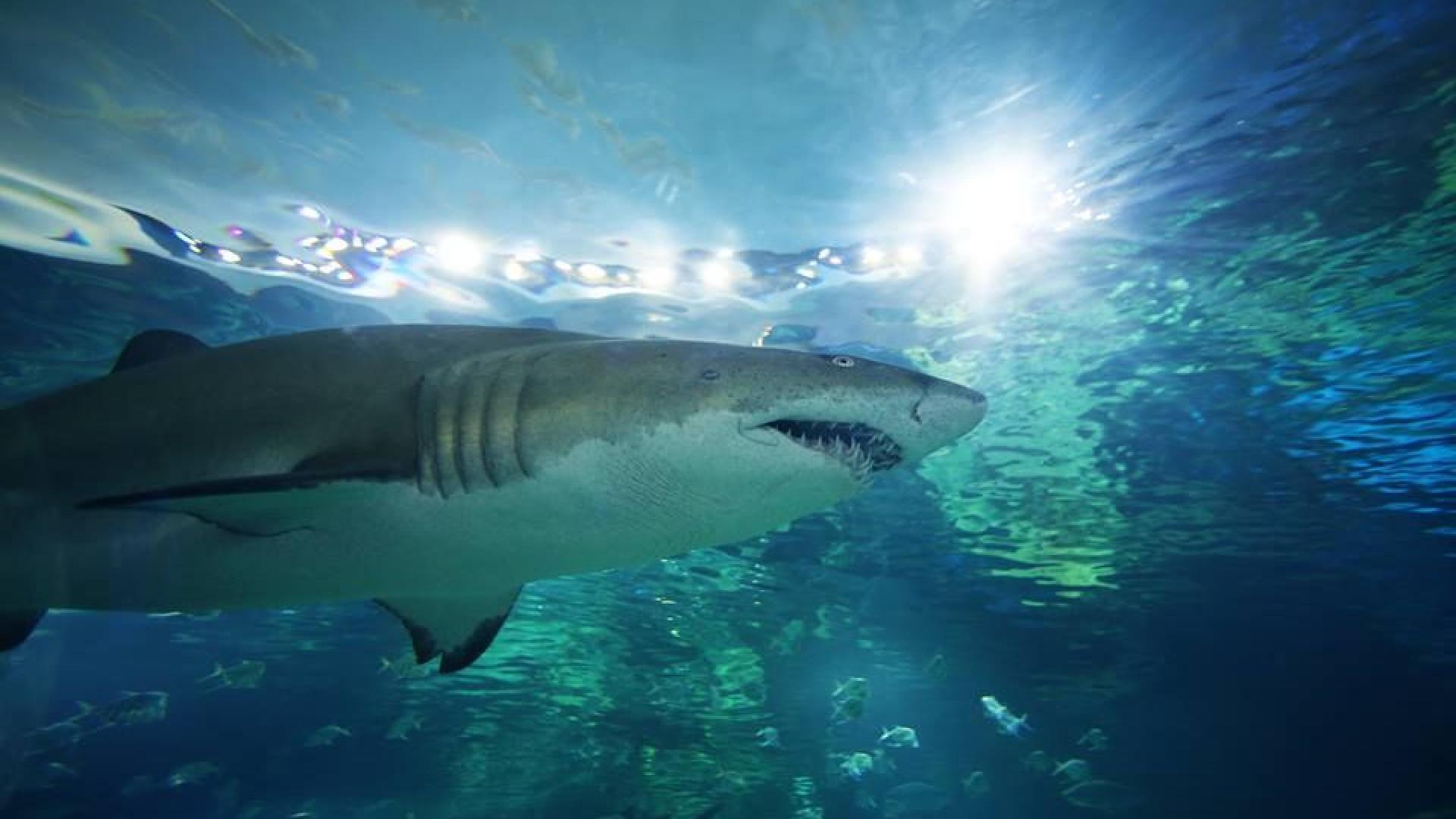Homem despiu-se e mergulhou no aquário dos tubarões. Polícia procura-o
