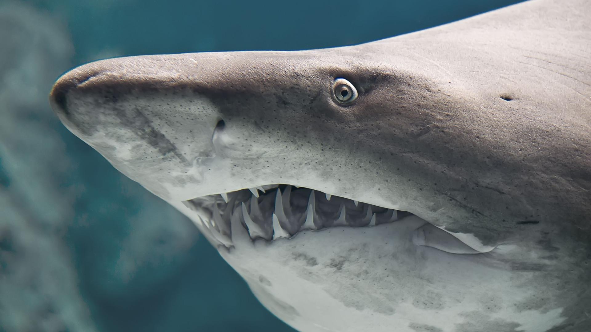Homem sobrevive a ataque de tubarão em praia de nudistas na Austrália