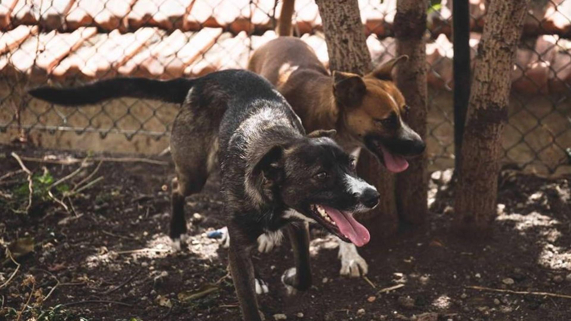 Buscas na Câmara da Calheta por suspeitas de maus-tratos a animais
