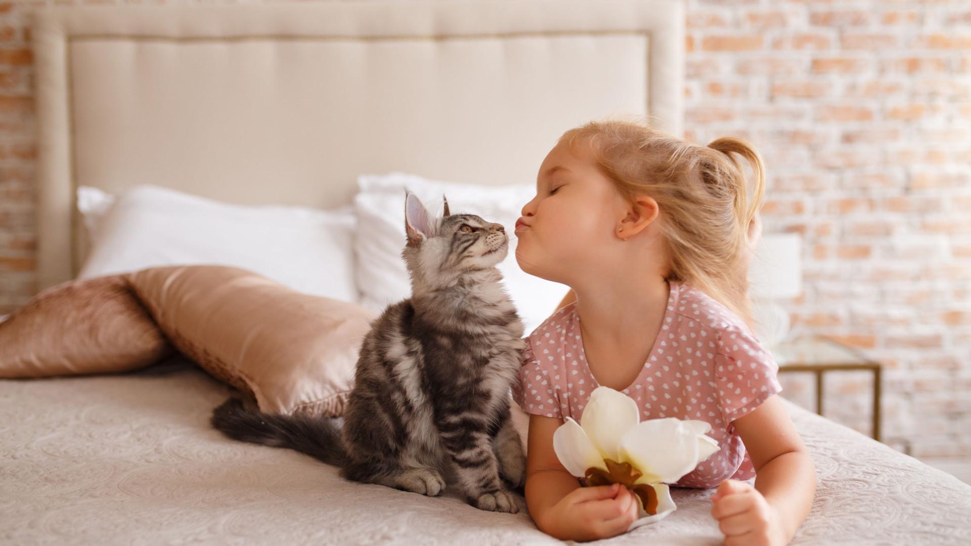 As melhores raças de gatos para ter em casa