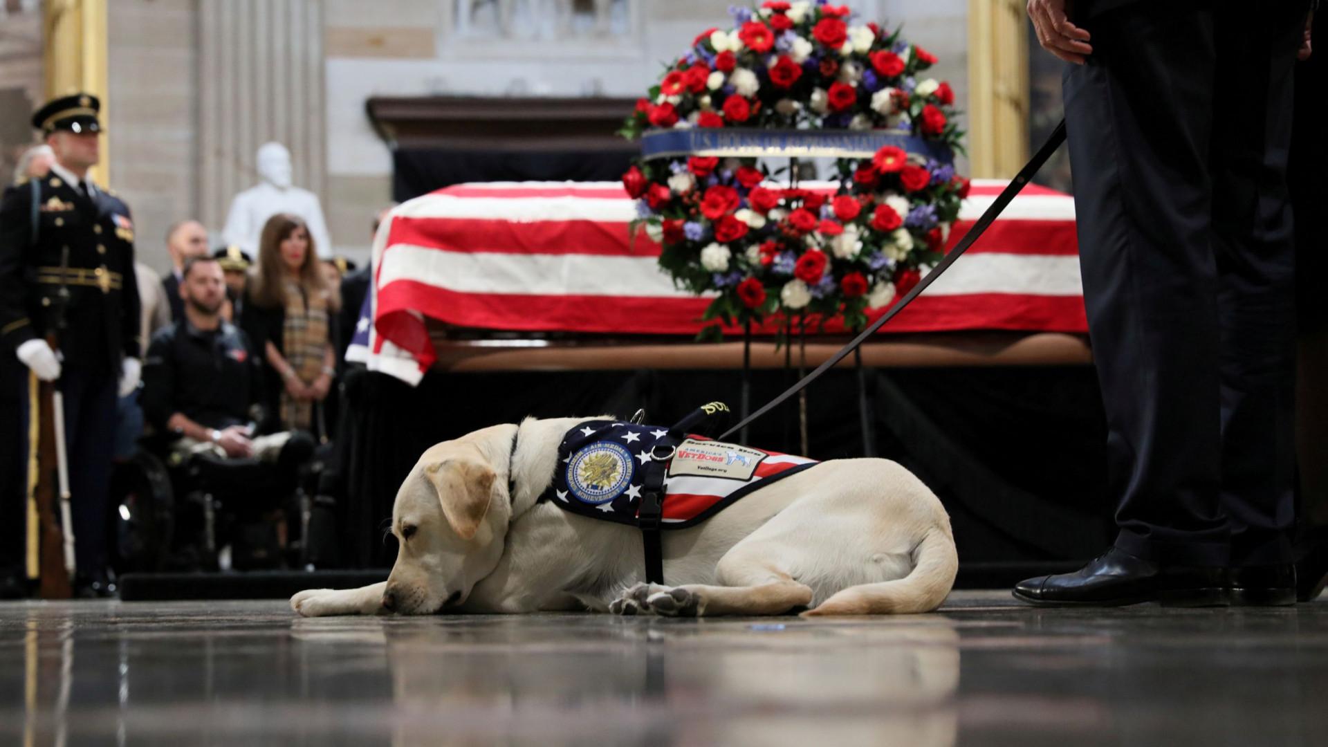 O luto de Sully, o cão do antigo presidente, no adeus a George H.W. Bush
