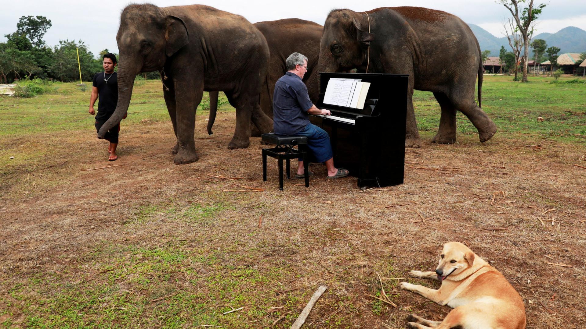 Disse 'adeus' aos palcos para 'dar música' a elefantes que foram abusados