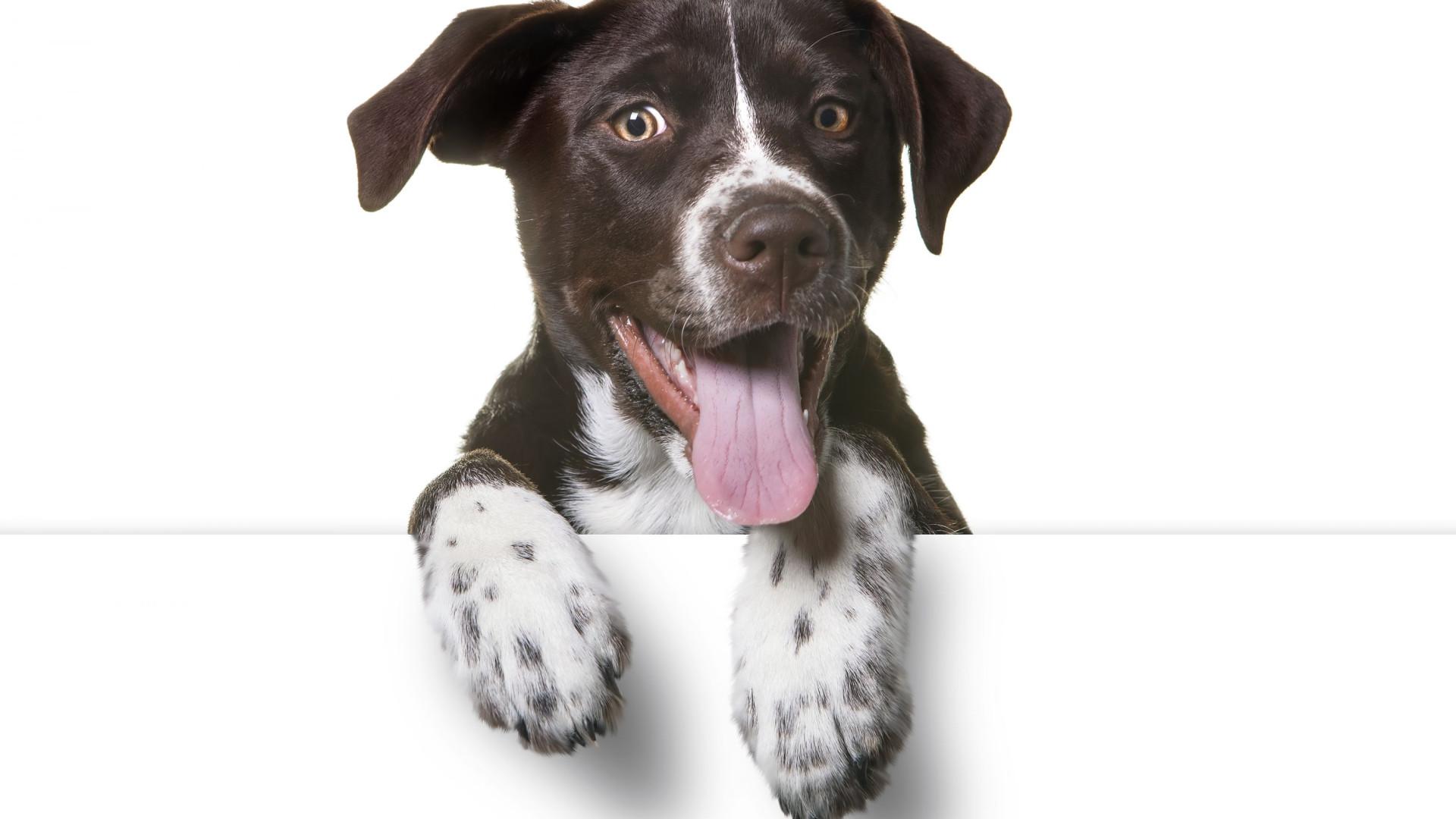 Afinal, será que os cães conseguem ver as cores?