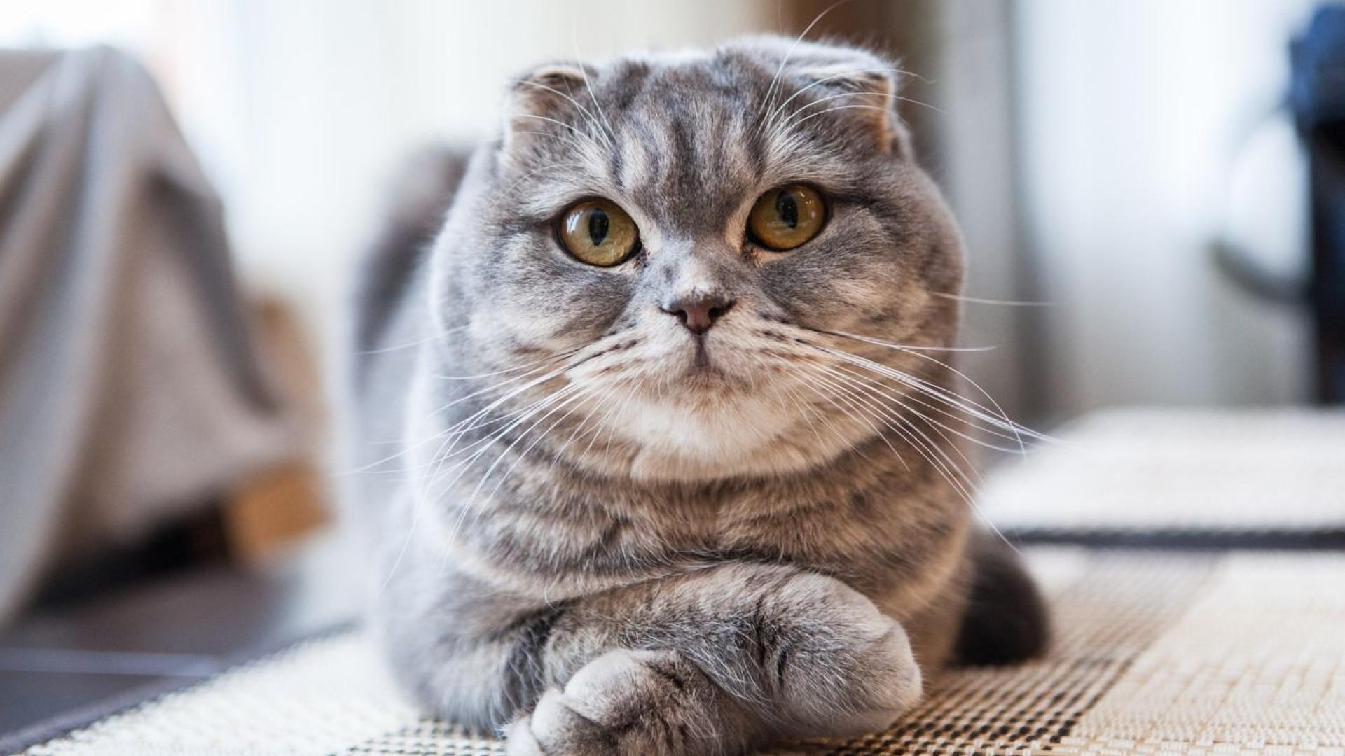 Chinês multado por ter devolvido gato a abrigo animal por correio