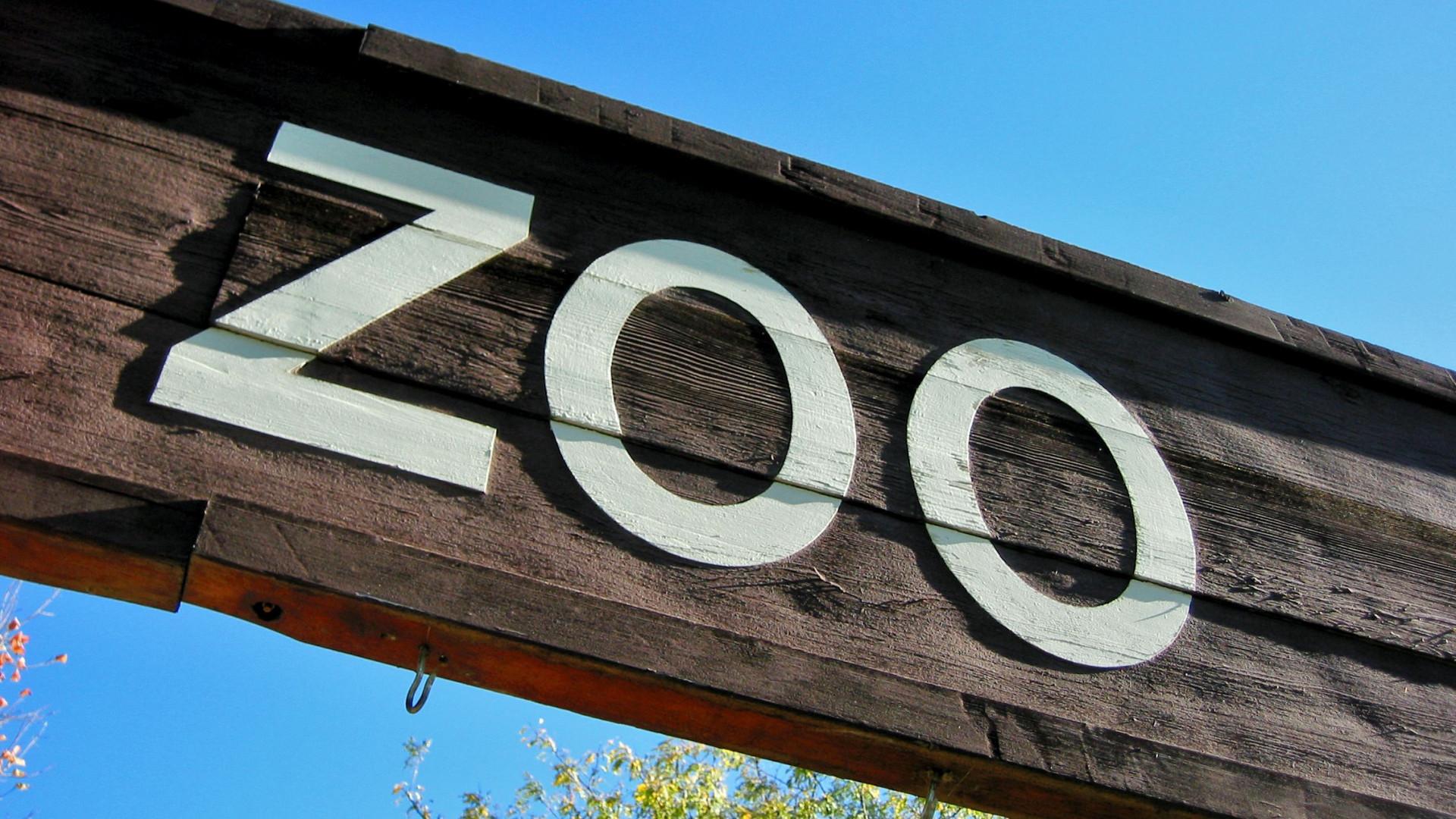 Zoo de Gaia diz que planta com bactéria Xylella fastidiosa foi destruída