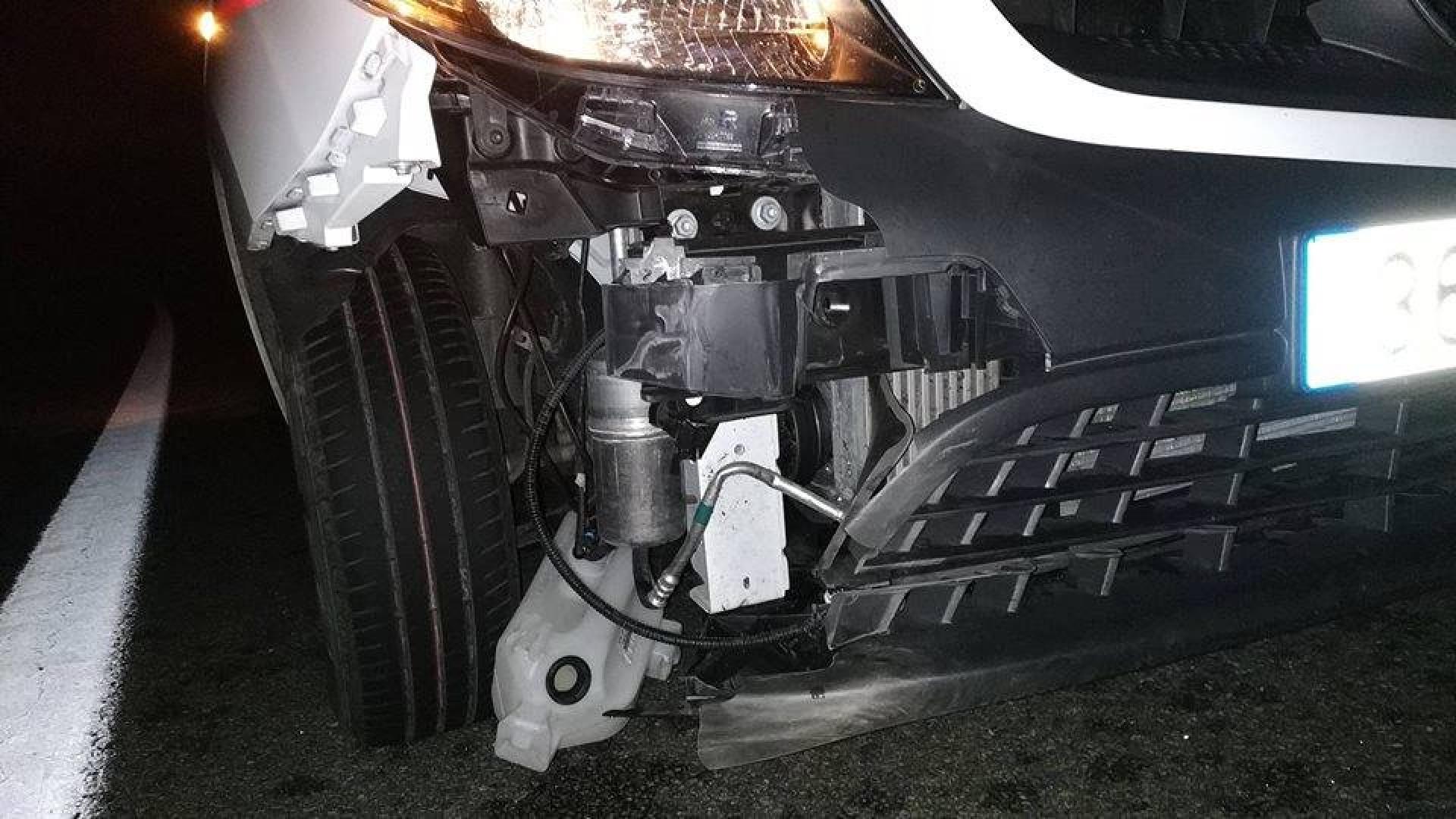 Bombeiros admitem processar Ascendi após choque com javali na A7