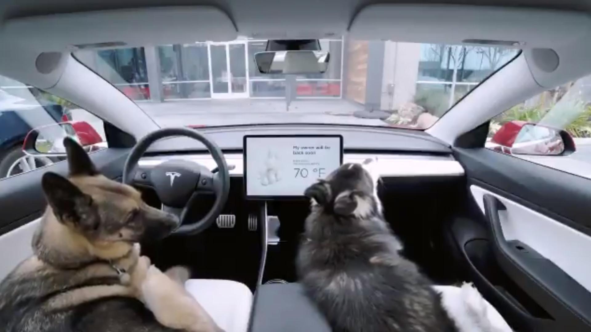 Novo modo da Tesla deixará o seu cão em segurança