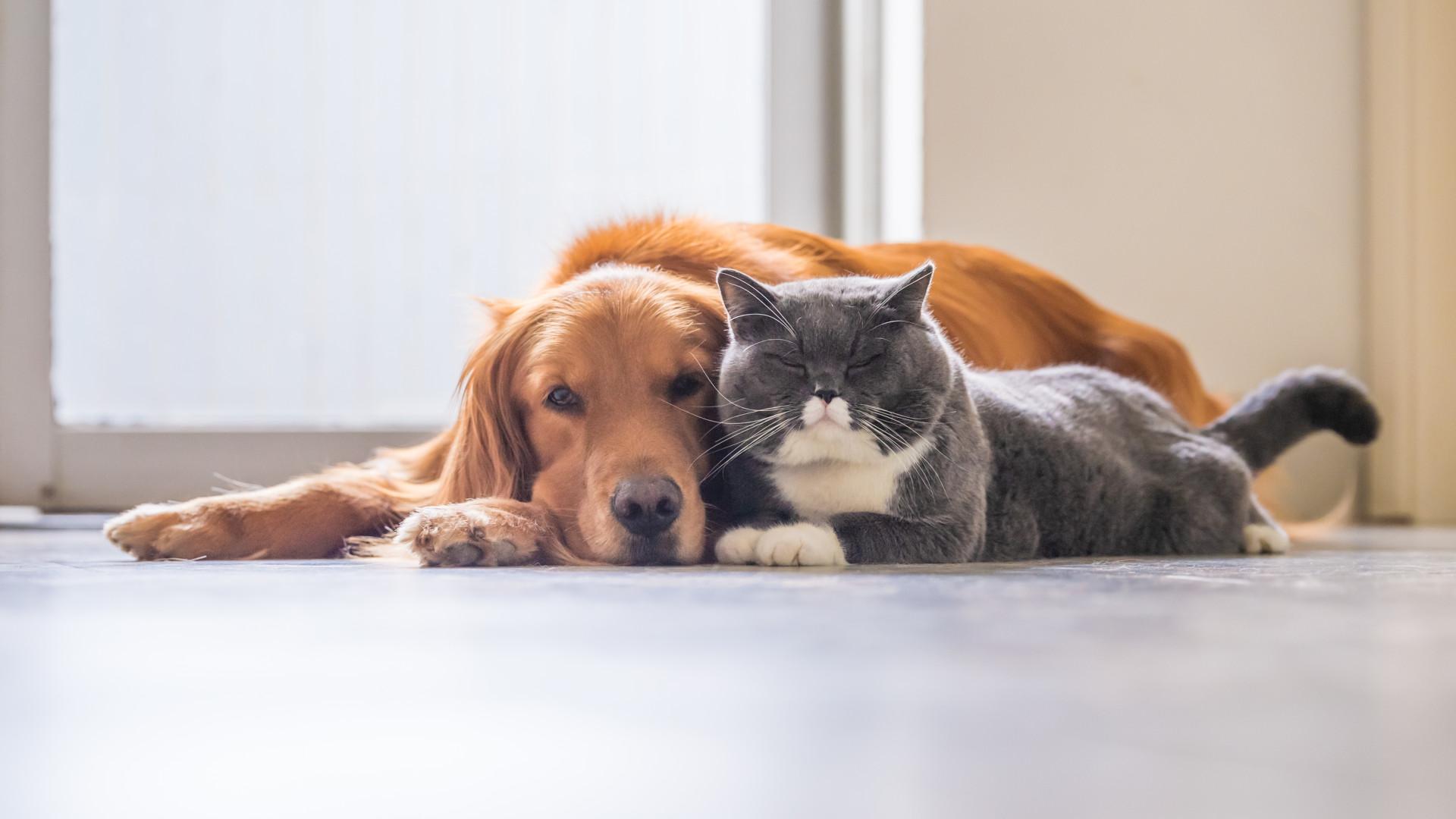 Guia de 10 passos para integrar um animal de estimação na sua família