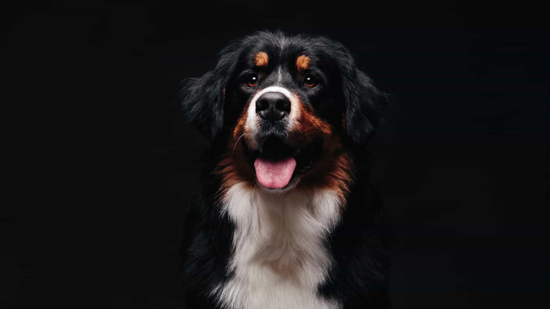 O stress sentido pelos humanos contagia cães, alerta pesquisa