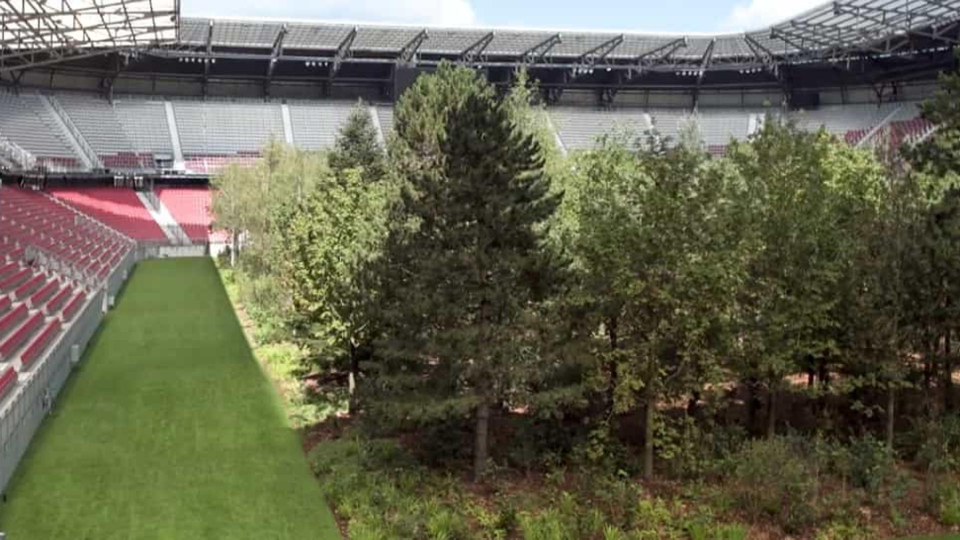 Uma floresta a crescer num estádio para tentar vencer a desflorestação
