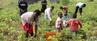 Pobreza diminui em Moçambique mas ainda atinge metade da população