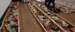 """Cooperativa salva em 14 toneladas de """"fruta feia"""" no Porto e Gaia"""