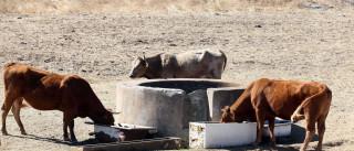 Falta de água para gado desespera agricultores do Baixo Alentejo