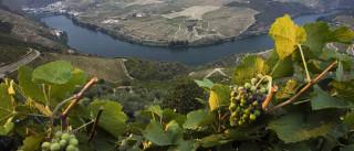 AETUR faz balanço positivo da missão de promoção do Douro no Brasil