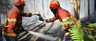 Incêndios: Mais de 60 bombeiros combatem fogo em Alcanena