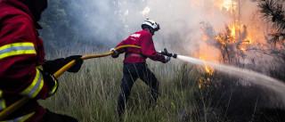 Fogo em Manteigas atinge área do Parque Natural da Serra da Estrela