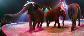 Petição 'Por um circo mais humano' ultrapassou as 12 mil assinaturas