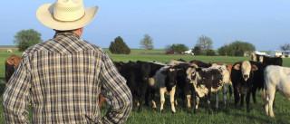 Incêndios: Apoio à alimentação de gado fica imediatamente disponível