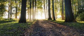 Governo dedica próximo Conselho de Ministros à Floresta